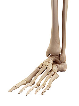 Spécialités de la chirurgie du pied